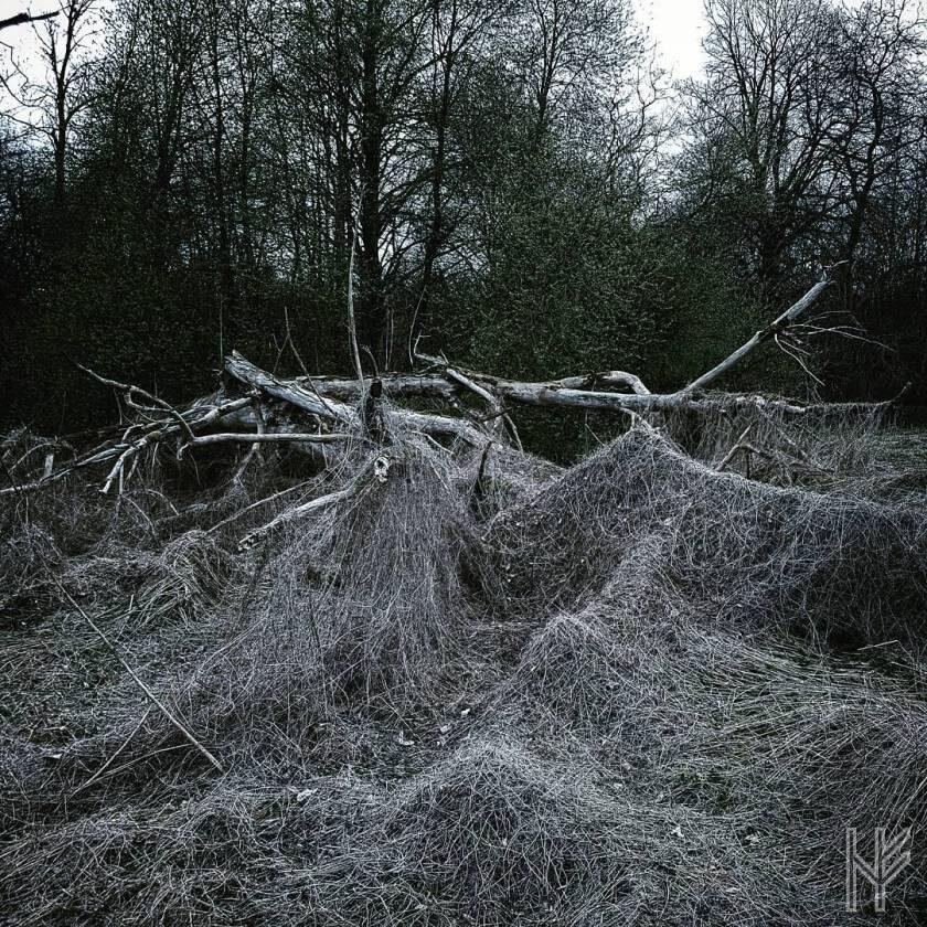 Baum-Skelett oder Landwicht?