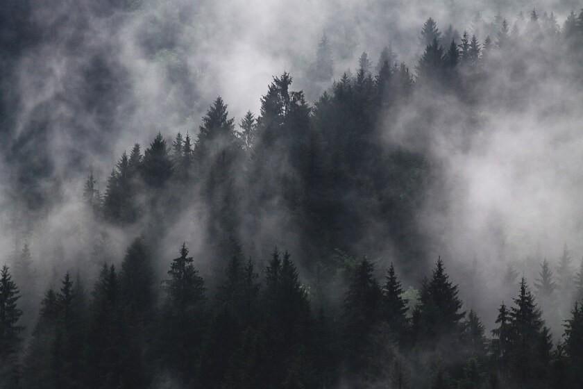 Wald mit Nebelschwaden