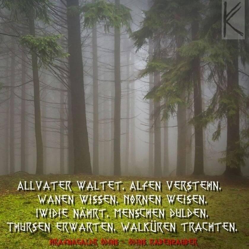 Wald im Nebel mit Rabenzauber-Text