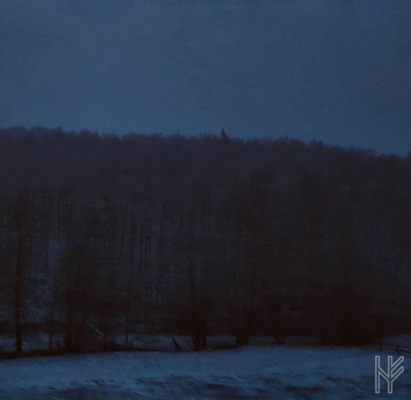 Wald mit Schnee in der Dämmerung