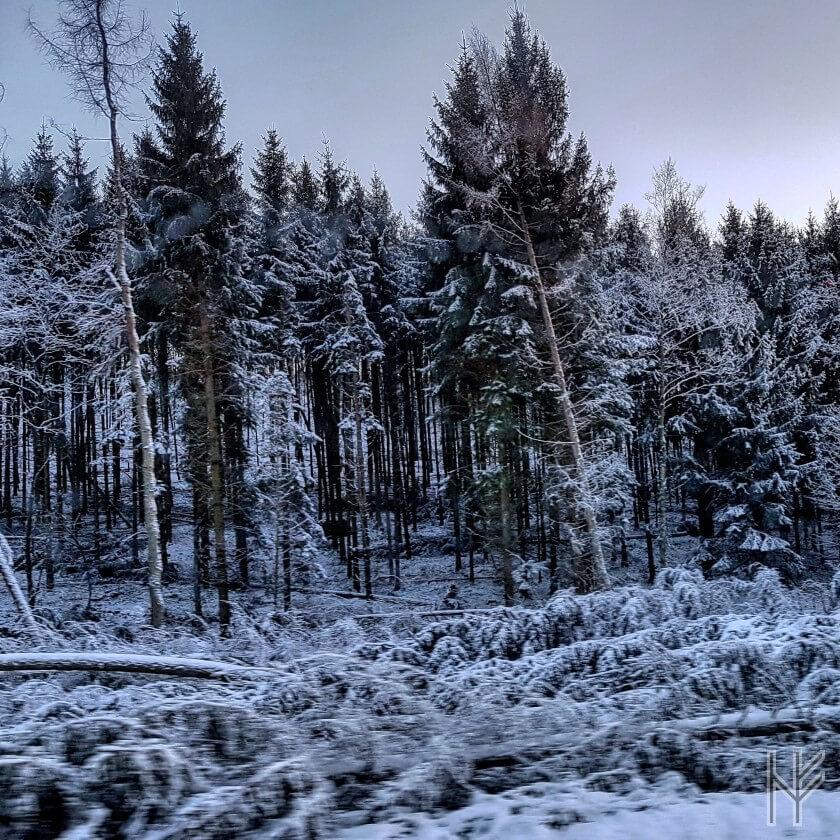 "Winterwald nach ""Friederike"""