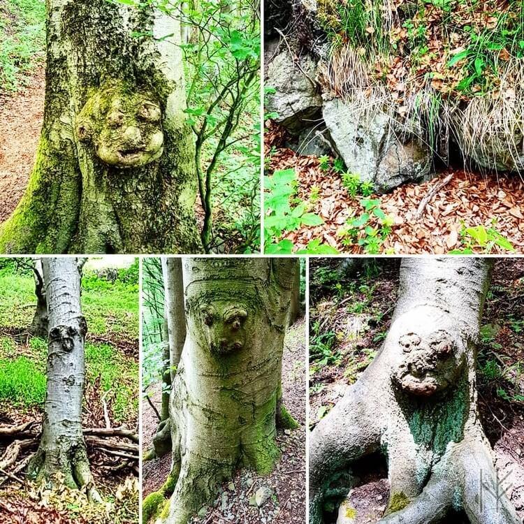 Waldgeister und Baumgesichter