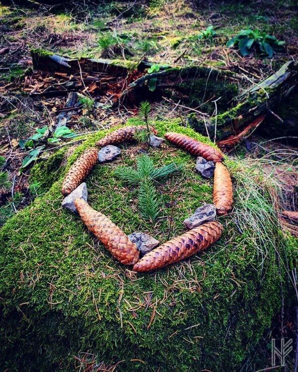 Baumstumpf mit Spross und Algiz im Kreis.