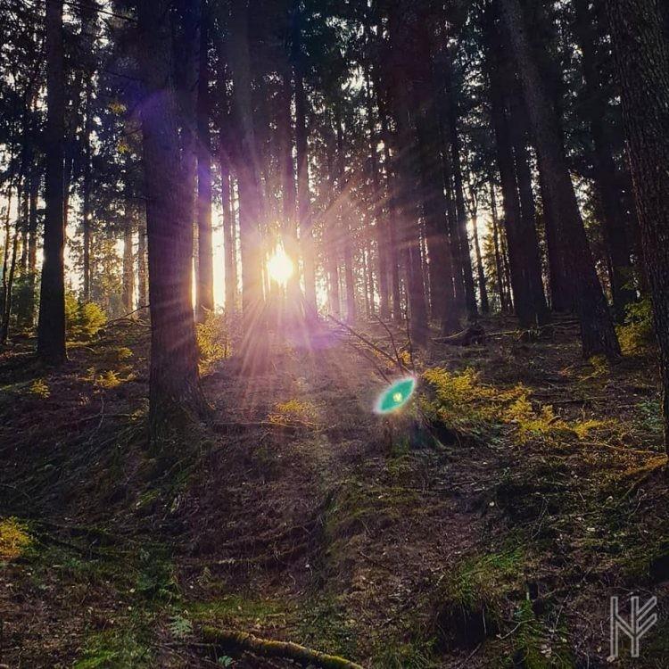Der abendliche Wald auf dem Rückweg.