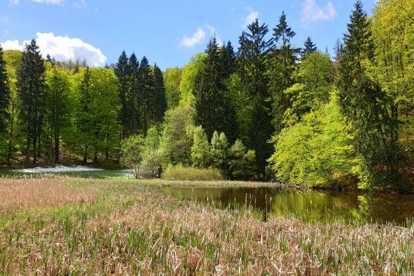 Der Frau Holle-Teich